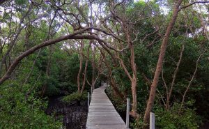 Hutan Mangrove di Bali